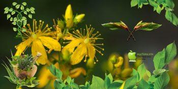 Kilo Almak İçin Şifalı Bitkiler