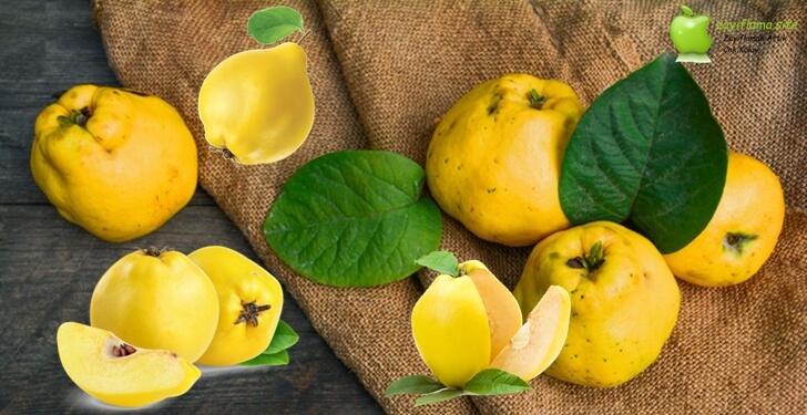 Diyet Yaparken Ayva Yenir Mi? Ayvanın Kalorisi ve Besin Değerleri