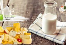 Diyette Proteinin Önemi